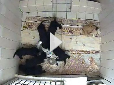 check out the live puppy cam!  it can be habit forming....