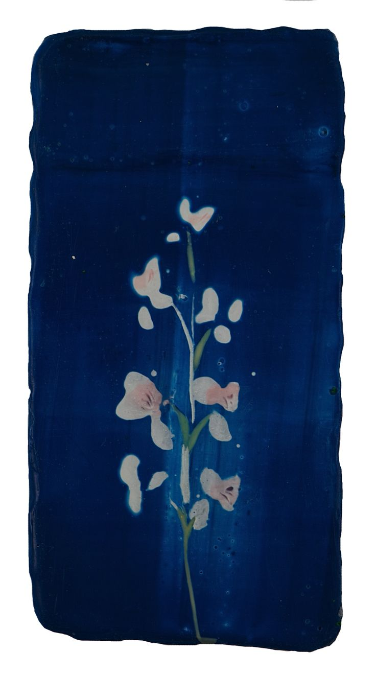 Anke Roder Night Orchid