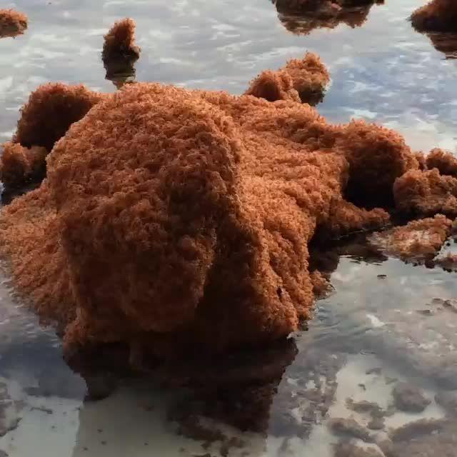 christmas island animals die 36 besten bilder zu crab auf pinterest hhlen arabica und