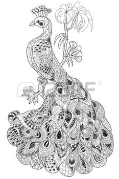 zentangle: Zen-enredo estilizado de pavo real. Dibujado a mano ilustración del doodle del vector. Boceto para tatuaje o colorantes. Colección del pájaro.
