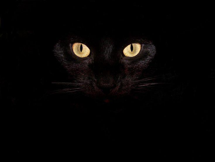 Beautiful Black Wallpapers Black Cat Black Wallpaper Cats