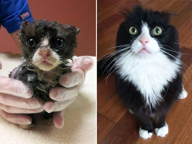 Best Rescued Animals Before And After Images On Pinterest - 27 amazing transformations of dogs and cats before after adoption