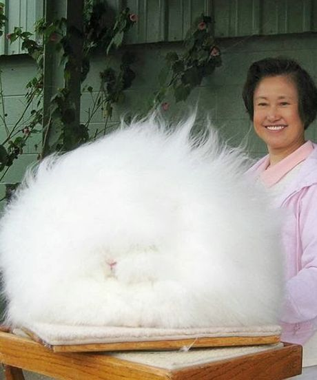 21 bunnies you won't believe really exist