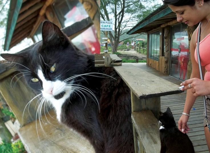 """3 Gatos Perdidos  """"Uma menina pediu para sua mamãe um gatinho. Depois de ganhar o bichano, o batizaram brincando de Caguei, porque insistia em fazer isso dentro de casa. Esse gato fugiu e a menina pediu outro gato pra sua mãe. O gato se chamou Bolinha: de tão gordo que ele era desde pequeno. Ele sumiu também e a menina pediu para sua mãe outra vez um gatinho. A mãe deu uma gata pra ela dessa vez. Foi chamada de Preta, porque era mesmo toda pretinha. Mas também Preta se foi. Ela…"""