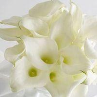 Die Calla wird ist allgemein auch als Drachenwurz bekannt. Ihr exotisches und elegantes Äußere lässt sie sehr edel wirken. Eine wunderbare Wahl für den Brautstrauß.  Blütezeit: Januar - Juni  Erhältlich: das ganze Jahr über  Symbolik: Schönheit  Hochzeitsfarben: Cremefarben, Grün, Weiß  Wichtiges: ist gut haltbar, duftet nicht