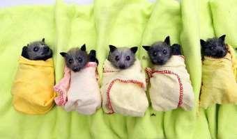 Murciélagos, no tan aterradores como creías