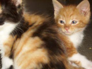 Milchtritt - Wenn Sie ein junges Katzenkind haben, dann haben Sie sehr wahrscheinlich auch schon einmal den Milchtritt gesehen. Die Kitten treten beim Säugen mit den Vorderpfoten an den Zitzen und regen so den Milchfluss an.