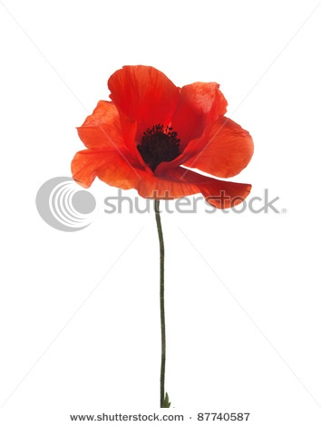 poppy tattoo , this is what I want...with the stem spelling out blessed