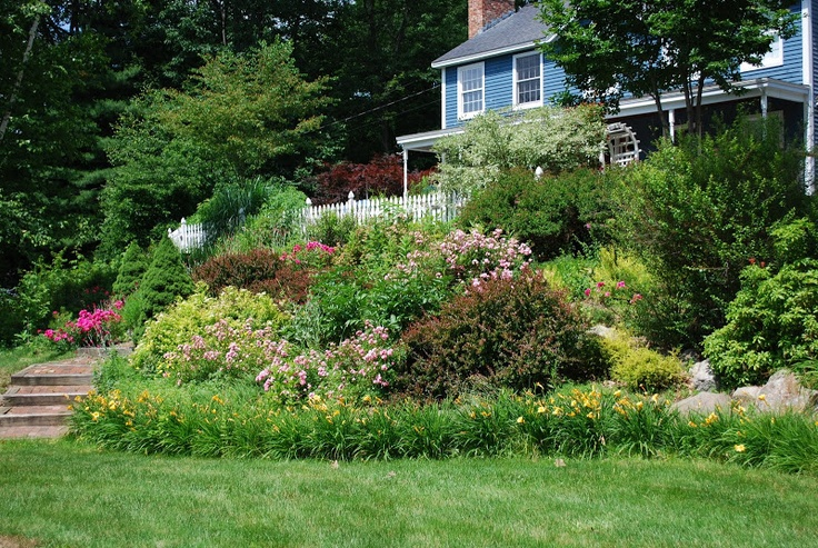 17 Best Images About Hillside Possibilities On Pinterest | Plants Sun And Deer Resistant Plants