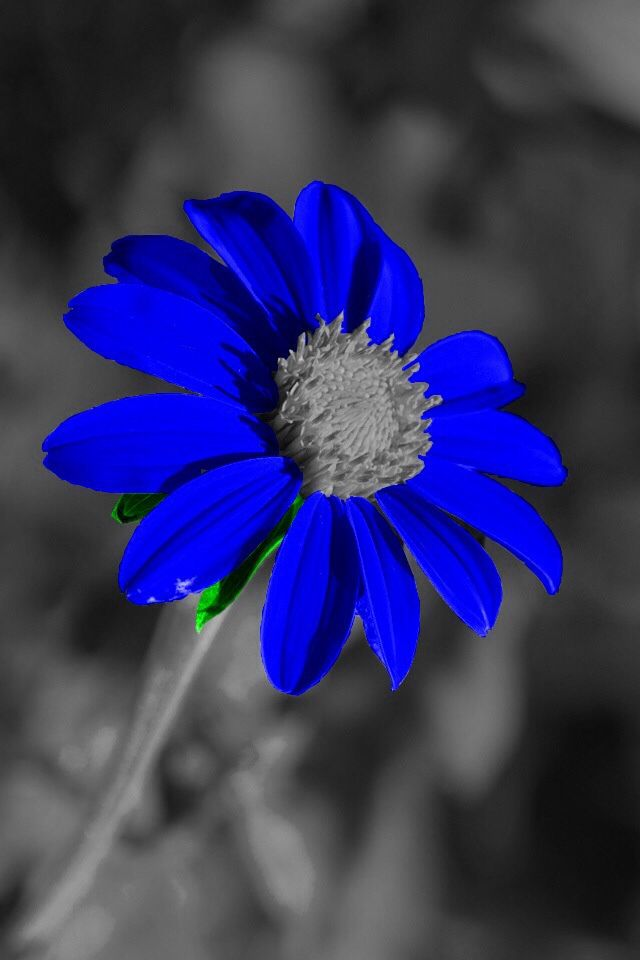 107 best images about color splash on pinterest yellow - Plants with blue flowers a splash of colors in the garden ...
