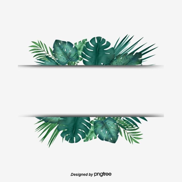 Green Tropical Plant Palm Leaf Border Border Clipart Palm Leaf Botany Png Transparent Clipart Image And Psd File For Free Download Leaves Wallpaper Iphone Tropical Frames Tropical Art Print