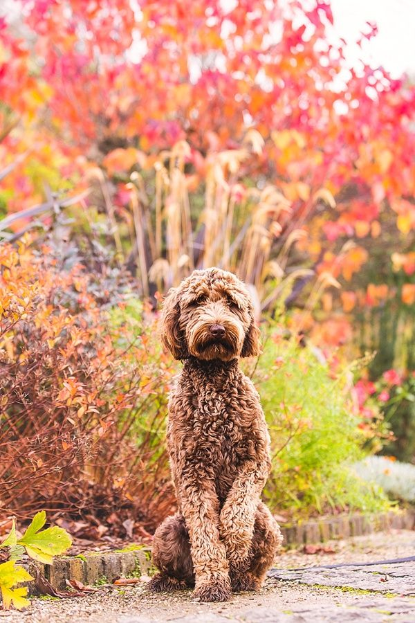 Pet Photography Tips: Get Your Dog to Look at the Camera | Pretty Fluffy. #4 is a really good one you don't hear often.