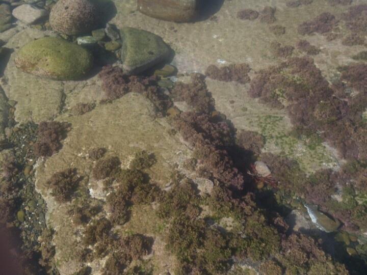 Underwater garden Gonube