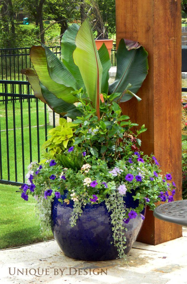 Container garden gardening pinterest gardens beautiful and sun - Large container gardening ideas ...