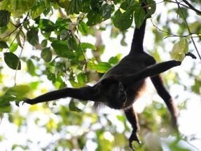 31 best images about Tropical Rainforest on Pinterest | Rainforest ...