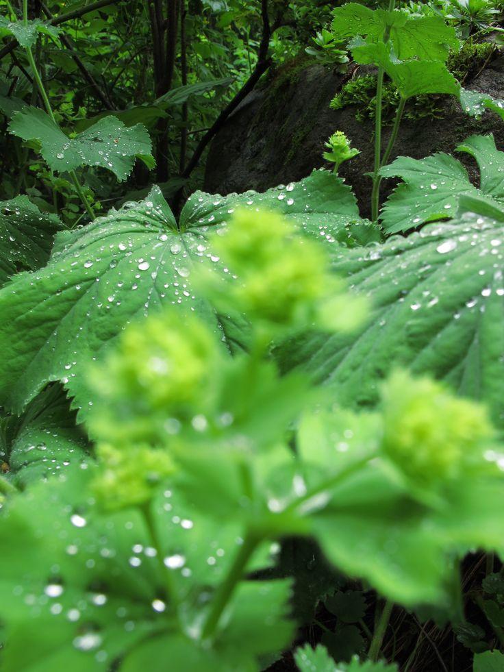 Garden green garden. It's raining.