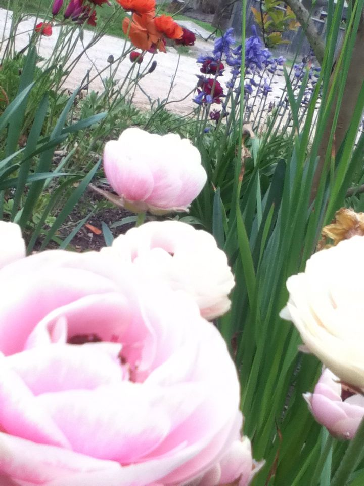 I love flowers ☺
