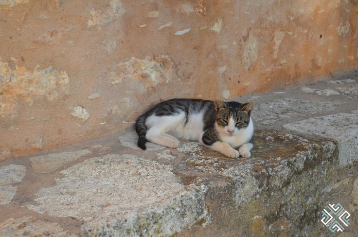 Cat resting at the Arkadi Monastery in Rethymno, Crete #passionforgreece #animals #cats #greekcats