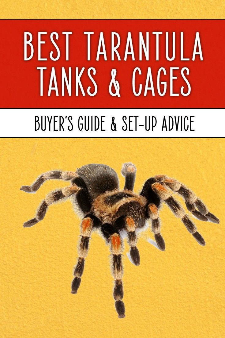 Tarantula Keepers Guide Book