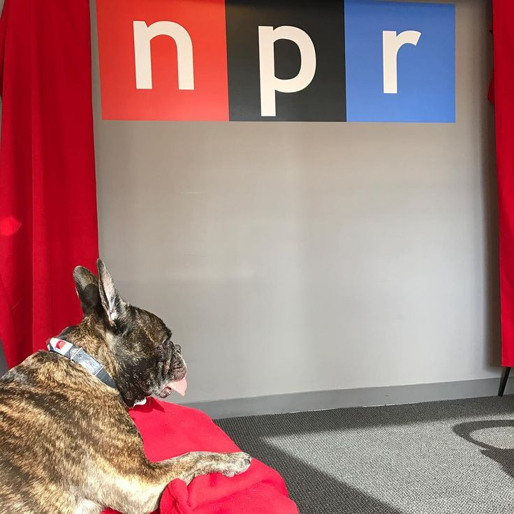 LISTEN: Carrie Fisher, Terry Gross — And Gary The Dog : The Two-Way : NPR Z