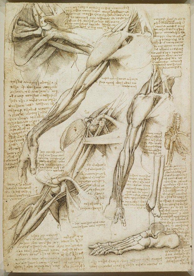 9 best art - leonardo da vinci images on Pinterest | Human anatomy ...