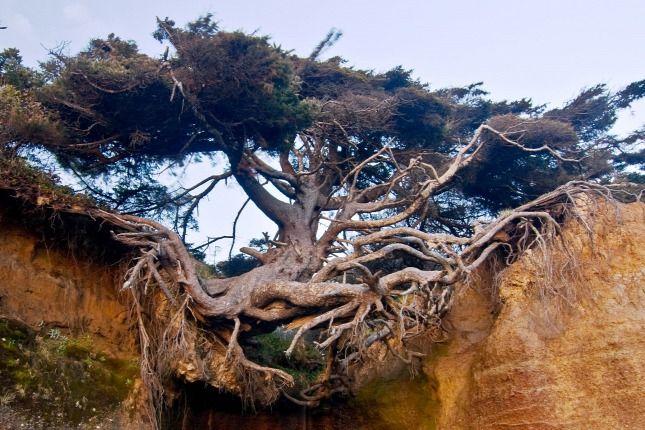 Az életéért küzd az élet fája