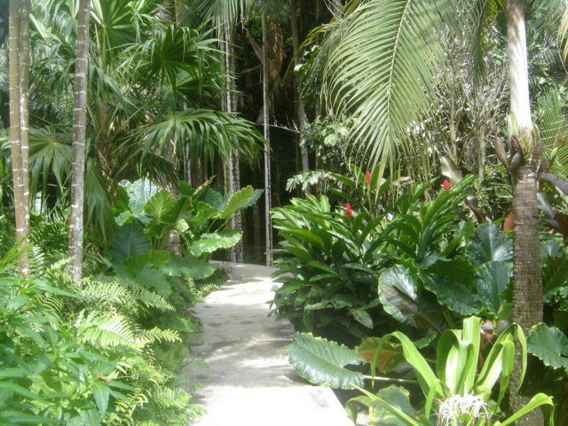 tags creer un jardin tropical jardin tropical