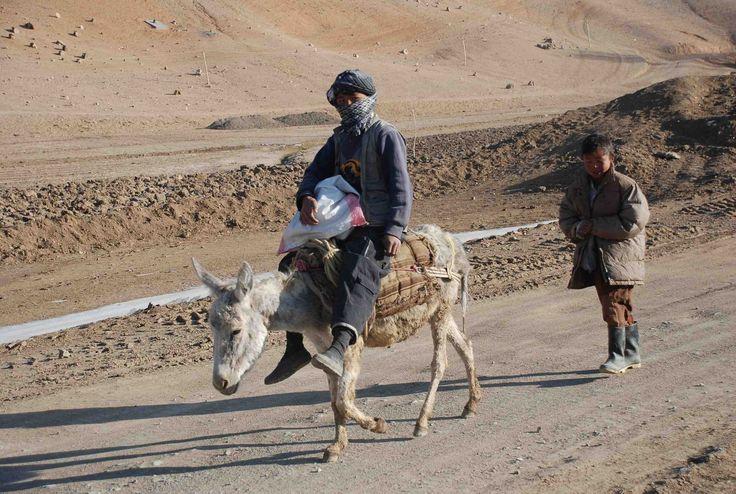 boy with donkey