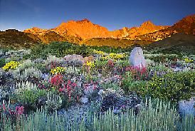 I love Mother Nature's gardens ...this one, Lone Pine, CA