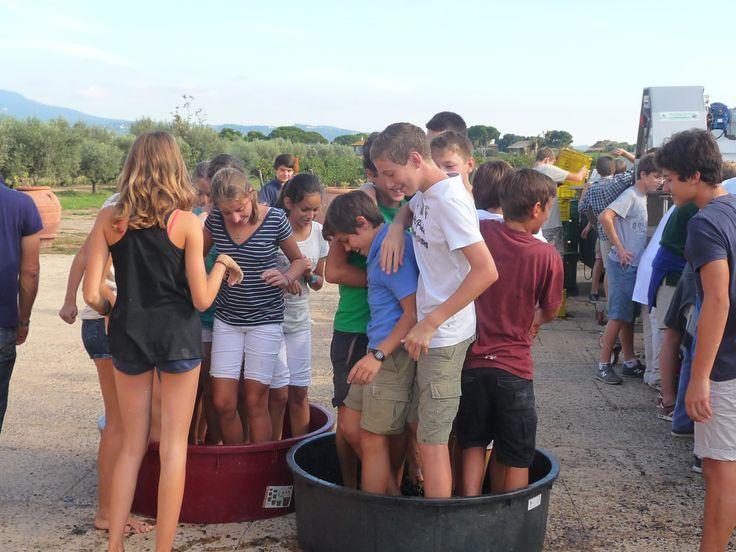 abbiamo ospitato un gruppo di studenti danesi e hanno imparato come si fa il vino!