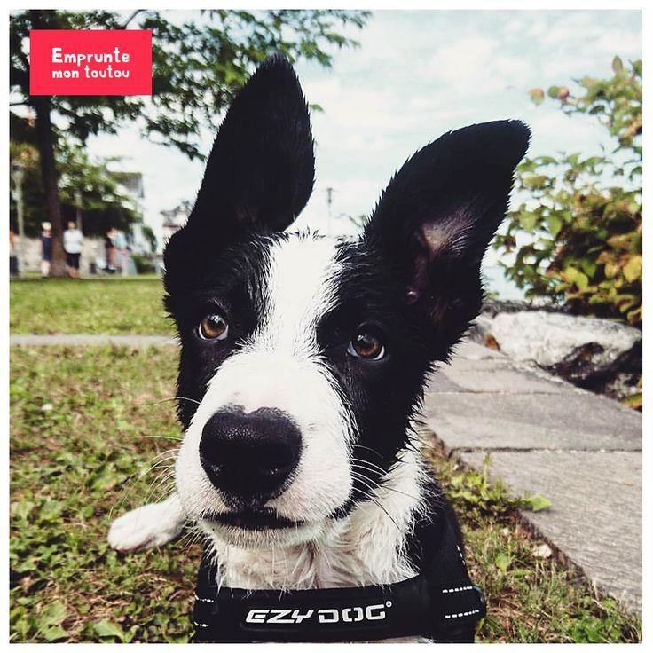 19 best garde de chien bordeaux images on pinterest. Black Bedroom Furniture Sets. Home Design Ideas