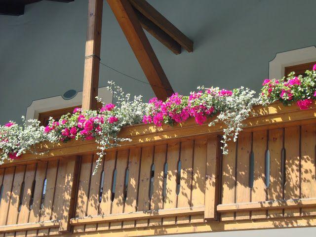 Un balcone in Austria con Pelargonium e Teucrium fruticans http://unpiccologiardino.blogspot.it/2013/09/balconi-fioriti.html
