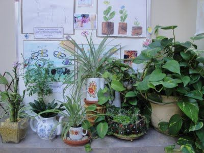 Every classroom needs an indoor #garden - I must get some plants for the classroom