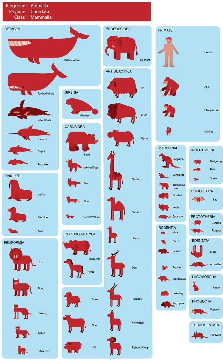 best Mammals images on Pinterest Wild animals Cutest animals
