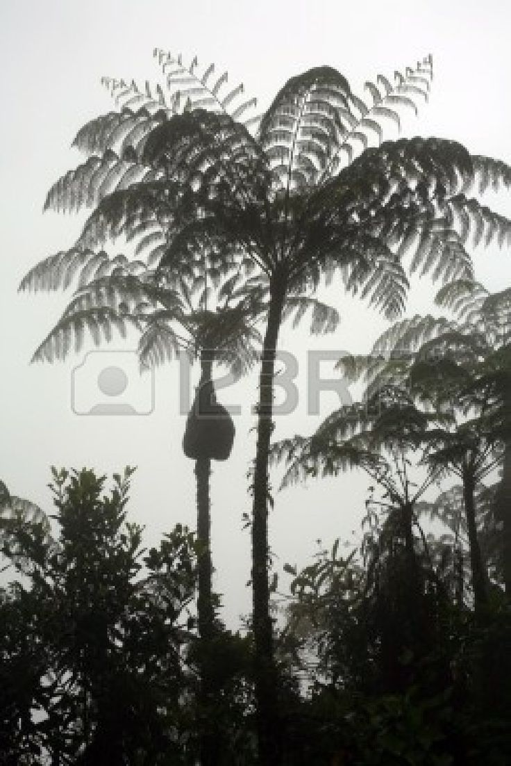 tree fern silhouettes - Google Search