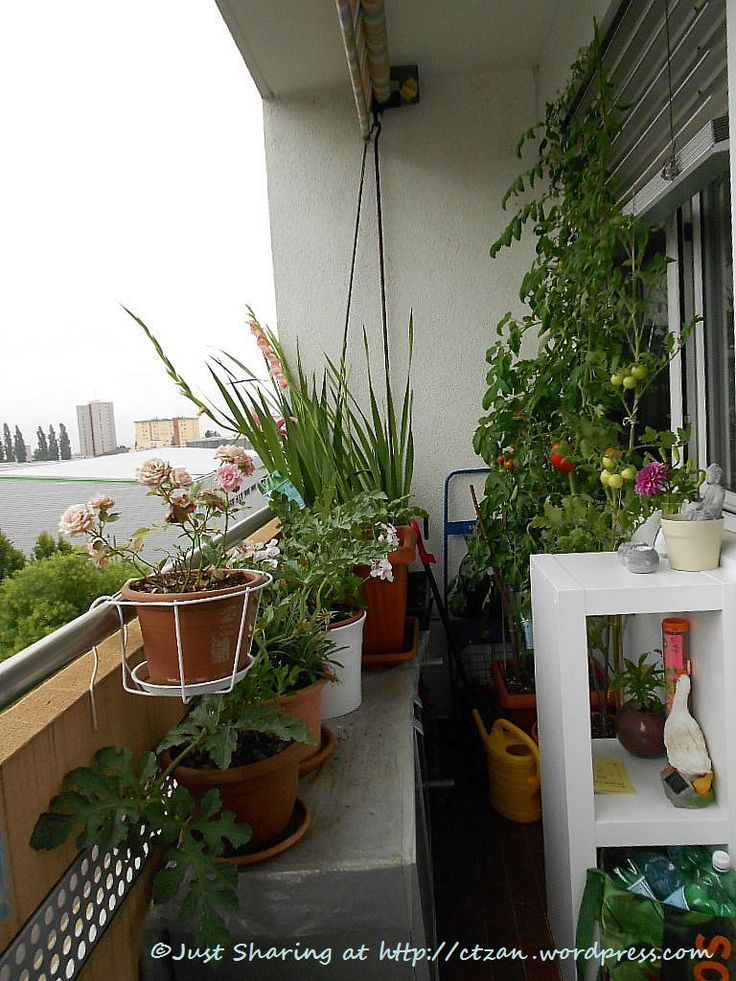 25 best ideas about apartment balconies on pinterest for Apartment balcony accessories