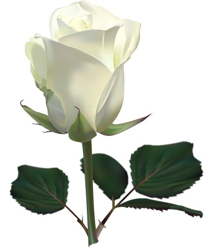 Large White Rose PNG Clipart Picture