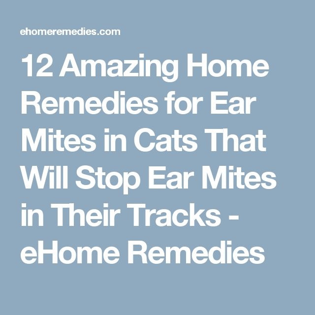 Natural Remedies For Ear Mites In Kittens