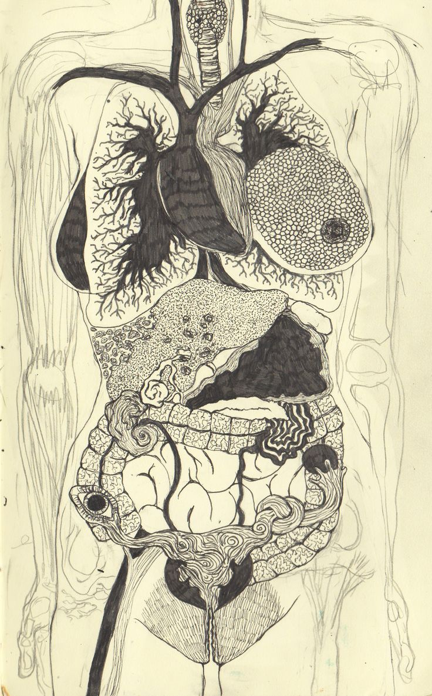 Интересные анатомические картинки