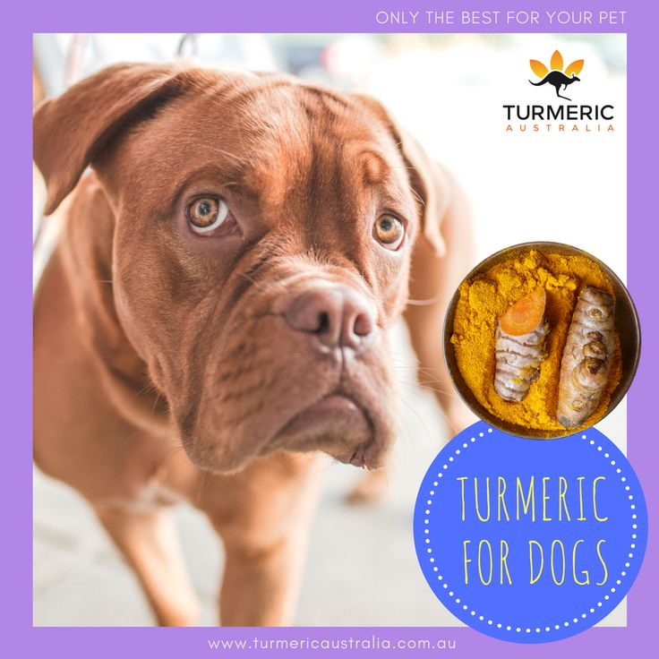 Best Anti Inflammatory Meds For Dogs