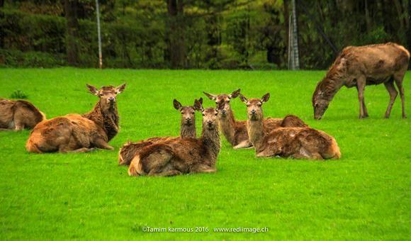 deer family portriet shot