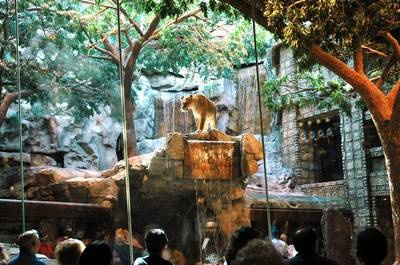 MGM Grand Lion Habitat (I guess it's closed now...)