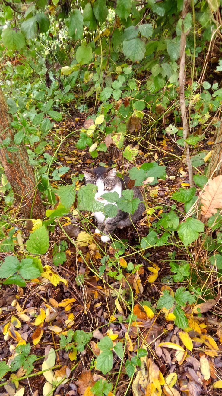 Hezel la nostra gatta!!!! #cat #cutecat