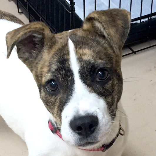 Adopt Murphy On Dachshund Mix Terrier Pet Search