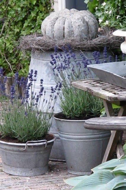 Conservatory Garden: Galvanized buckets...one of my favorite containers to plant in