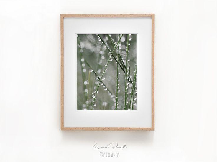 Trawy. 2 (20x30 cm) - MoniPoul - Fotografia kolorowa
