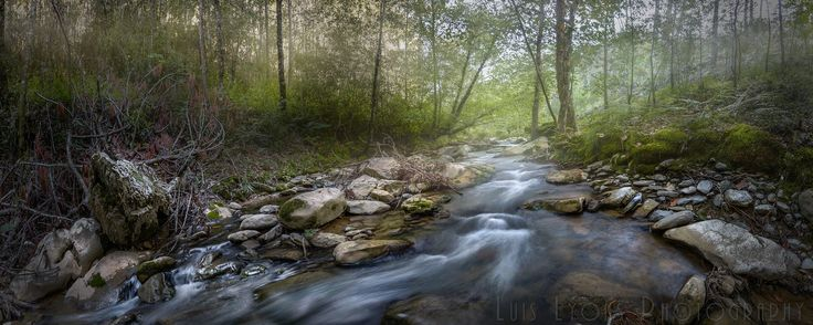 Foggy Creek in the Sierra Negra Highlands, Sierra Negra de Puebla, México.