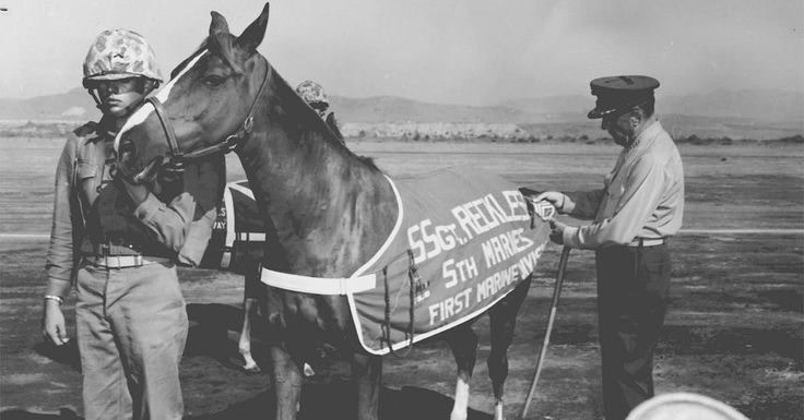Statue For Sgt. Reckless, The Heroic Horse Who Saved Lives And Supplied The Troops In The Korean War