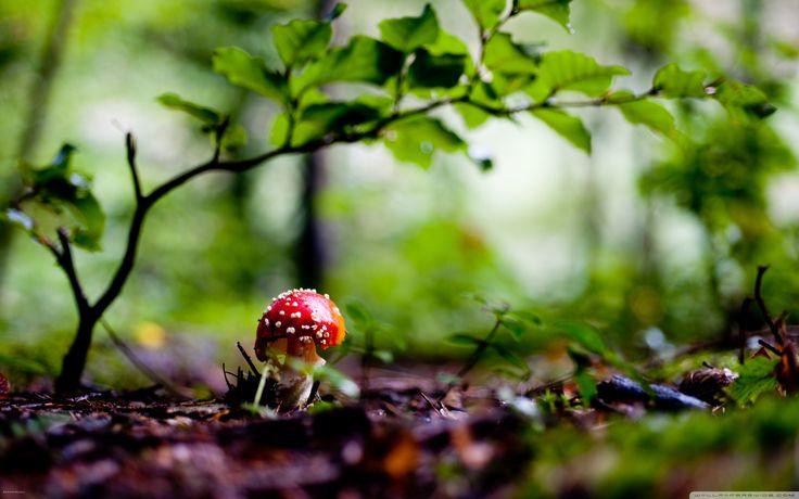 cool Mushroom Image For Free