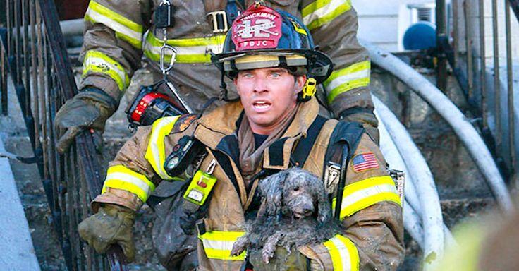Záchranné akce hasičů - záchrany psů